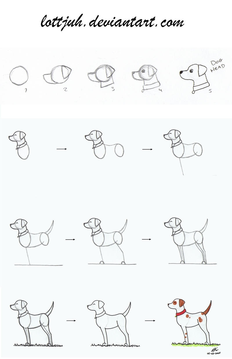 Simple Dog Body Tutorial by Lottjuh