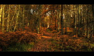 Autumn60 by Ptitlu60