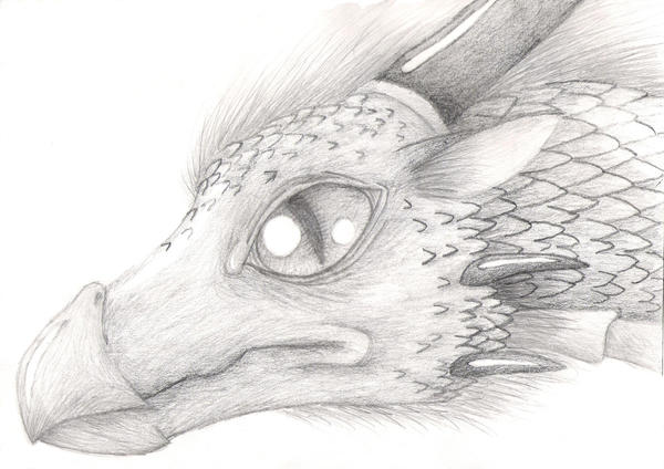 Realistic dragon by shikathefox