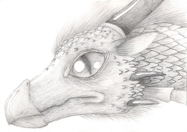 Realistic Dragon by ShikaTheFox on deviantARTDrawings Of Dragons Realistic