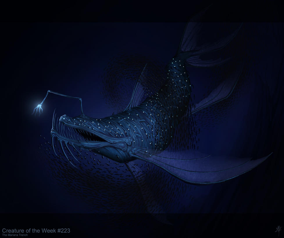 Star-hide Angler by rpowell77