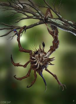 Asymmetrical Tree Crab