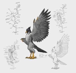 Falconid Hybrid