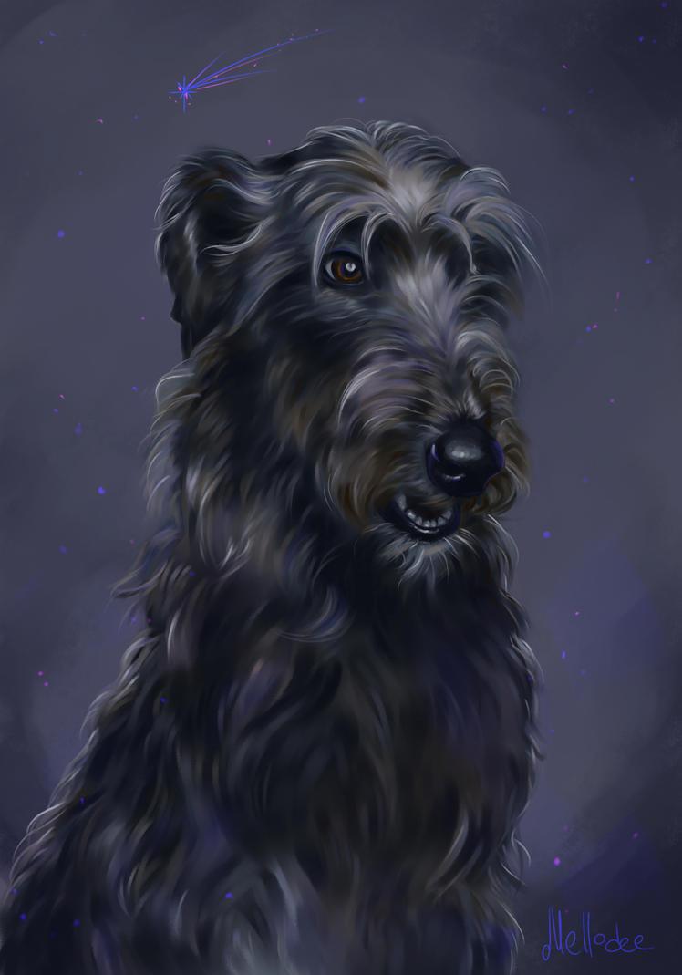 Irish Wolfhound by Mellodee