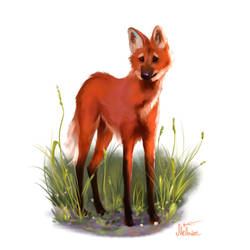 Maned Wolf by Mellodee