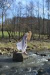 white dress stock - 9
