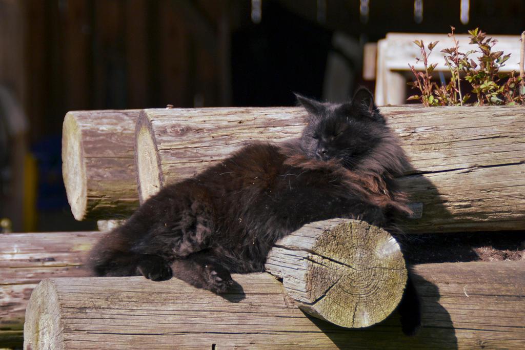 Summertime Laziness by o0Christina0o