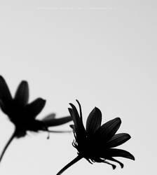 Simplicity by opticalfocus