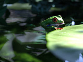 Froggy by Linwelly