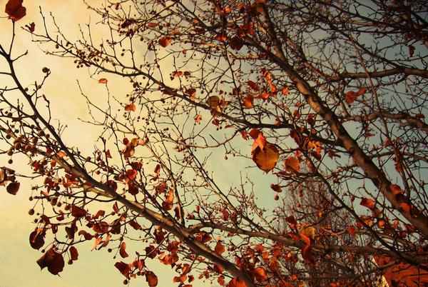 Winter Leaves by Zoelovesart