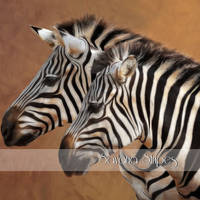 Savana Stripes