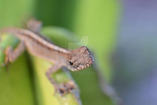 Baby Lizard 0589