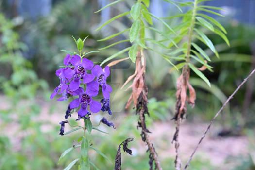 TTArtisan flower0736