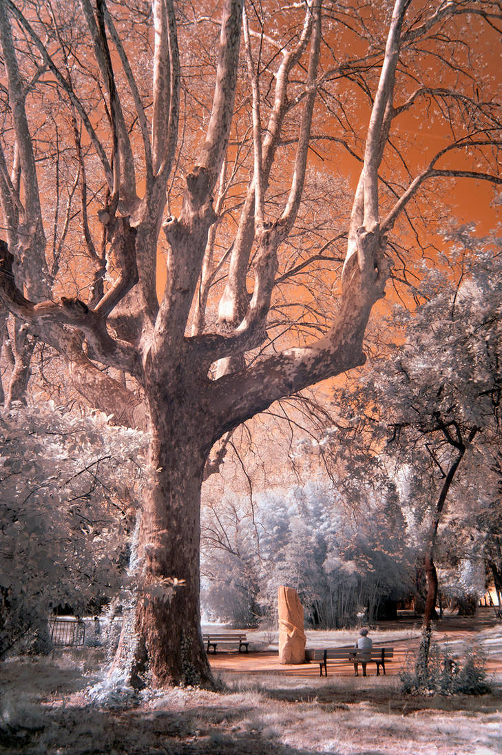 Magical tree - Infrared
