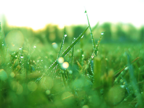 Web Picks #3: GRASS