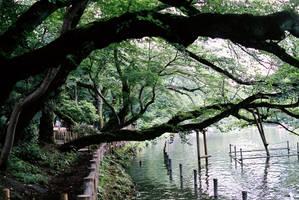 Inogashira Park by taujp
