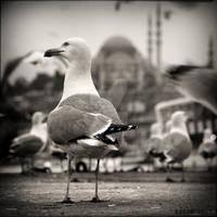 Istanbul is mine.