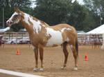 Horse Show Stock 4