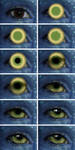 Eye tutorial - Avatar by Temawei