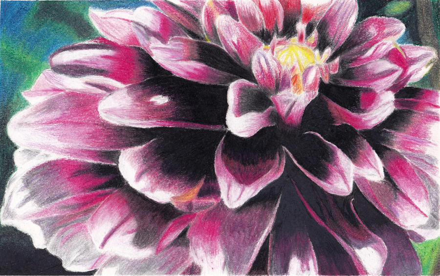 Colored Pencil Flower. by Megan-Renee on DeviantArt  Colored Pencil ...