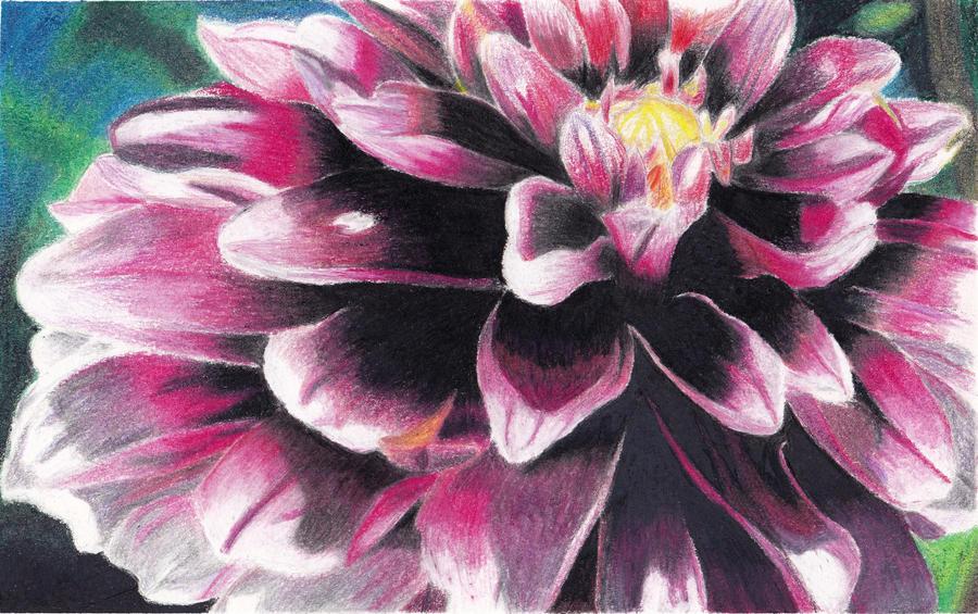 flower colour pencil sketches - photo #28