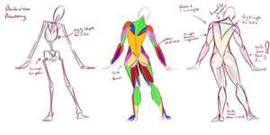 Back side Anatomy Quickie by jalajalapeno