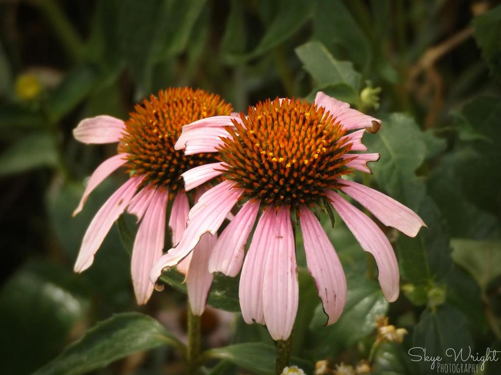 DSCF3851 by SkyeWrightPhotograph