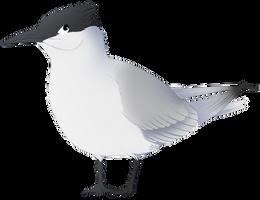 Tern hero by Heichukar