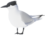Tern hero