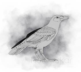 Crow kun