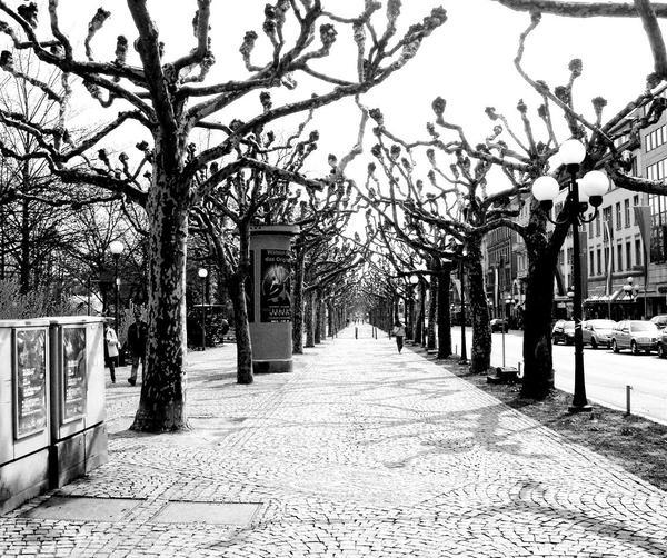 Row Of Trees by mypetrockbites2