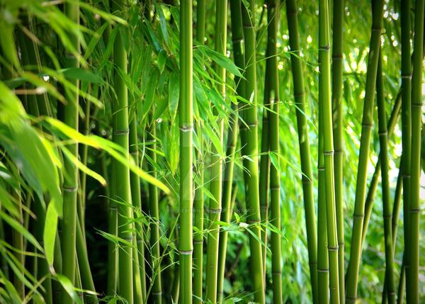Bamboo by Gabi-Siebenhuehner on DeviantArt