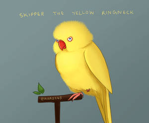 Skipper The Yellow Ringneck