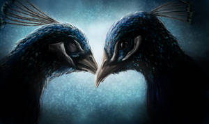 Pride Month: Peacocks