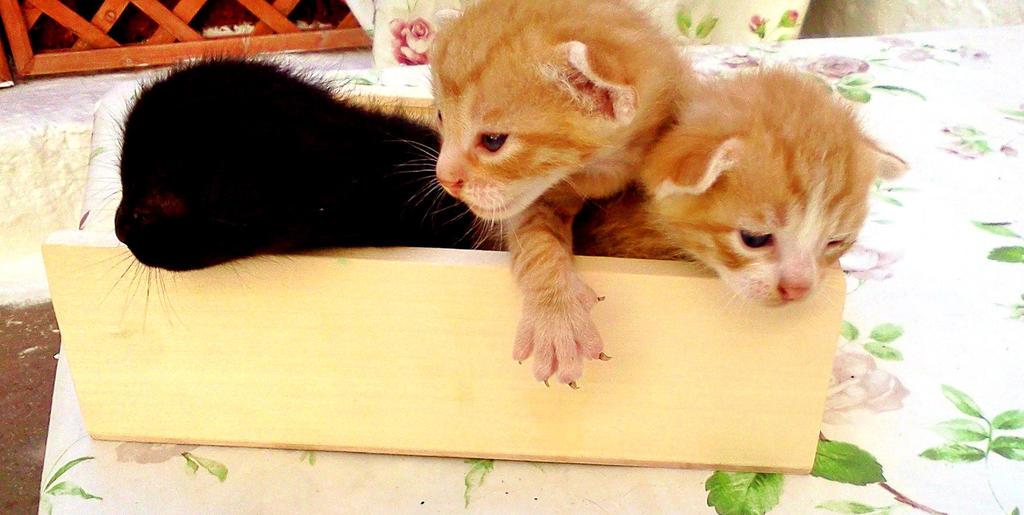 Hello kitties by nikoskap