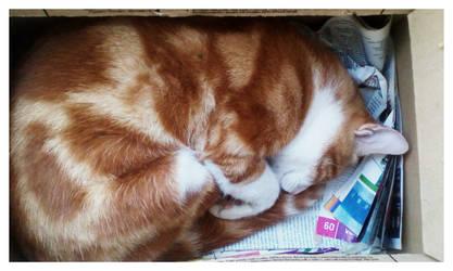 Snuck in the box.. by nikoskap