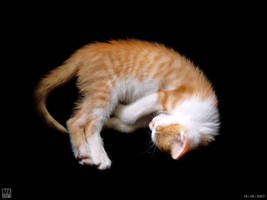 Lovely Cat 02 by AlienDrawer