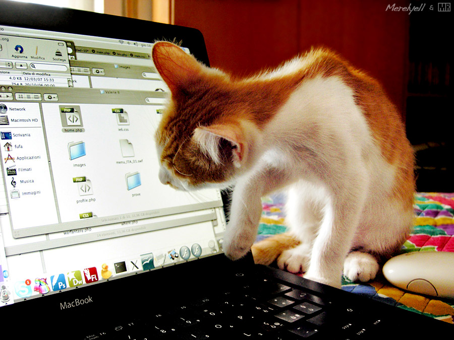 Mac Addicted Cat by AlienDrawer