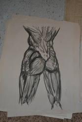 Muscle study, rear