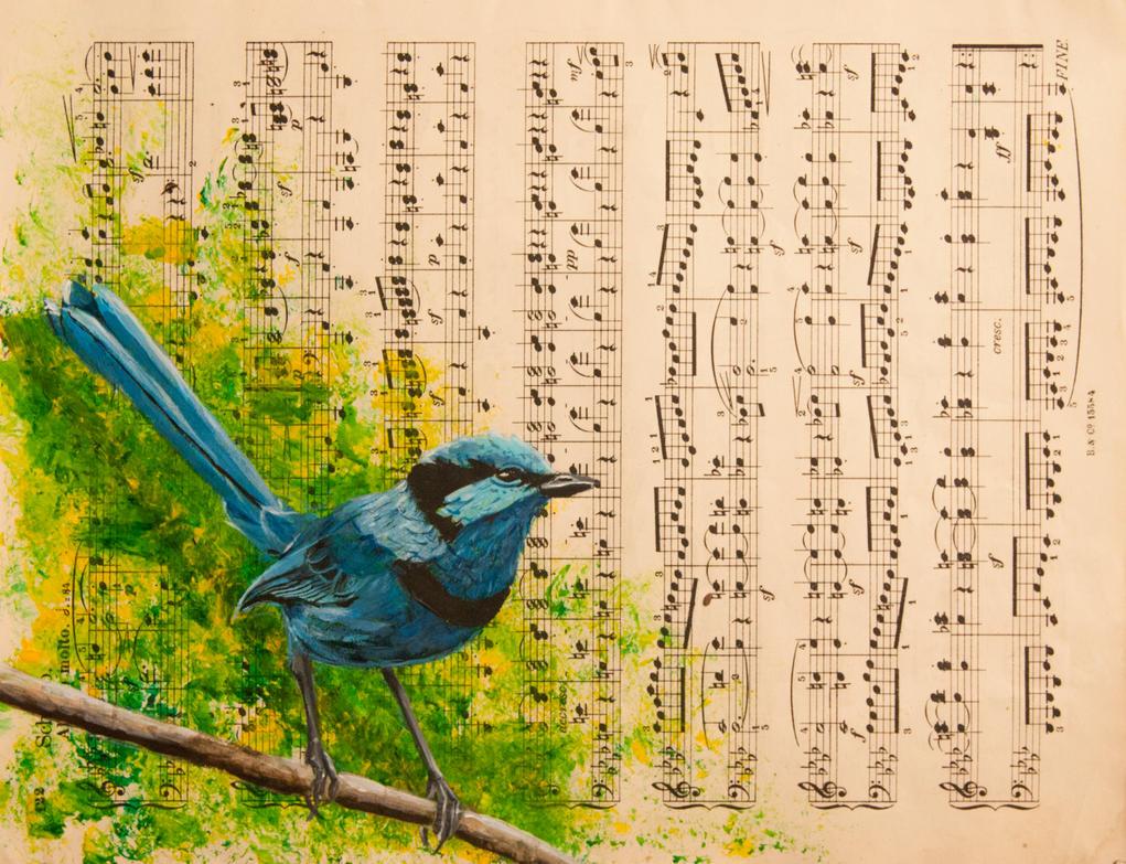 Splendid Fairy Wren by Charlene-Art