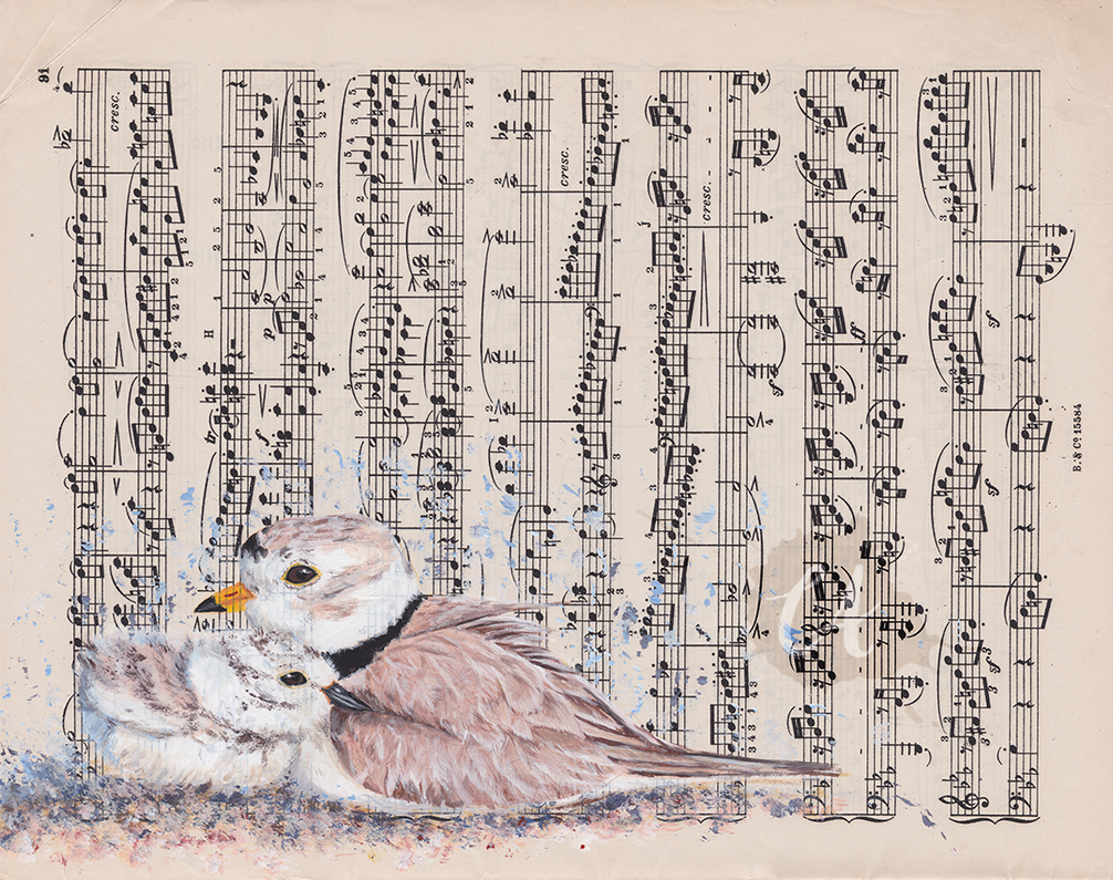 Piping Plovers by Charlene-Art