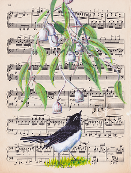 Willie Wagtail and the Bells
