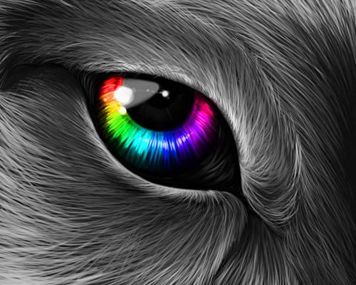 Colorful Wolf Eye