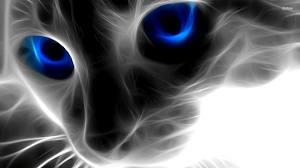 awesome cat by rainbowdinsaw