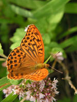 butterfly by doko-stock
