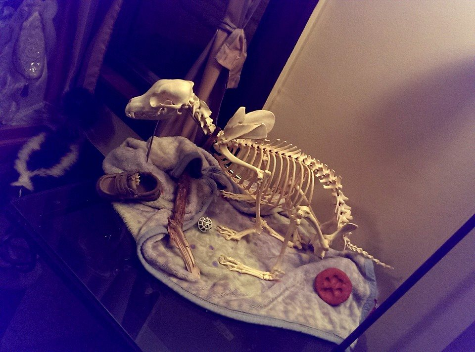 Seymour -- Articulated Dog by psychische