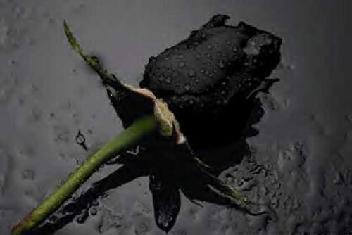 Black rose by BadBlonde69