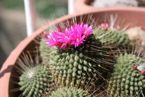 Cactus by Nabucodorozor