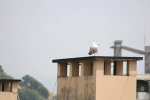 Seagull by Nabucodorozor