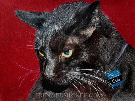 Gus the Cat